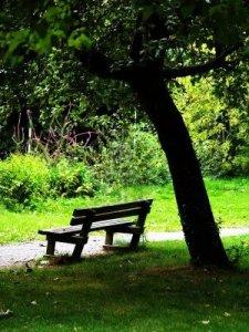 513985-un-banco-y-un-arbol-en-un-parque-publico